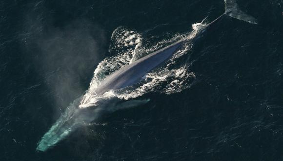 Tahlequah y su nueva cría, llamada J57, parecen estar saludables, informó el Centro para la Investigación de las Ballenas (Whale Research Center). (Foto: Referencial / Pixabay)