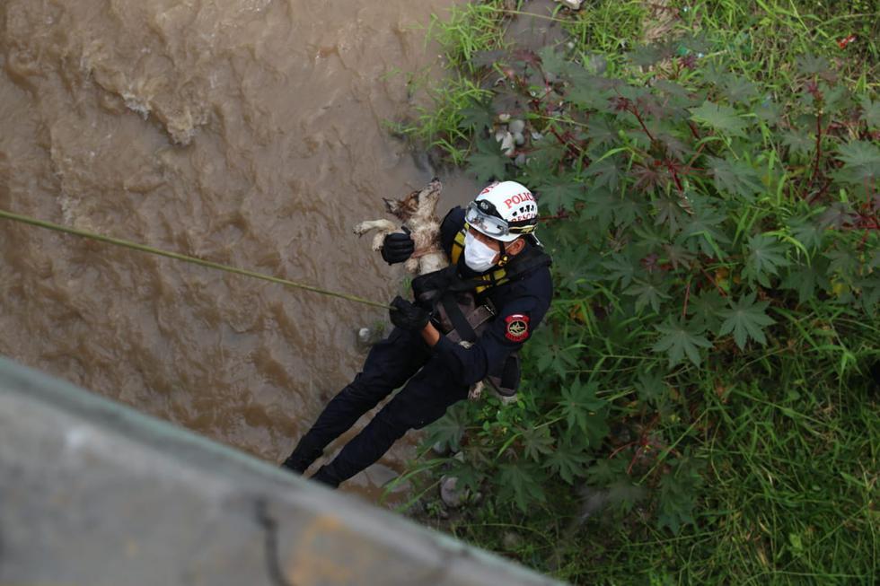 Coronavirus Perú EN VIVO: perrito que cayó al río Rimac fue rescatado por la Policía. Foto: Alessandro Cuarrino