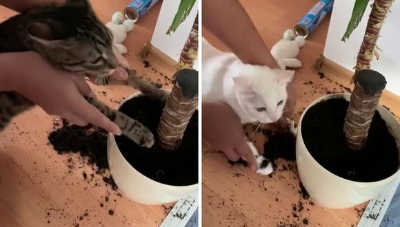 Los felinos tuvieron que hacerse cargo de lo que ocasionaron. (Foto: ViralHog | YouTube)