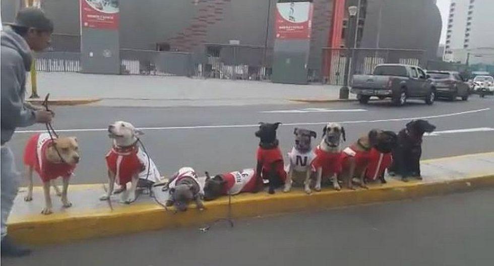 Perú vs. Ecuador: Mascotas llegan al Nacional con la camiseta blanquirroja