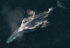 ¡La bendita naturaleza! Orca volvió a ser madre tras llorar por 17 días a su cría muerta