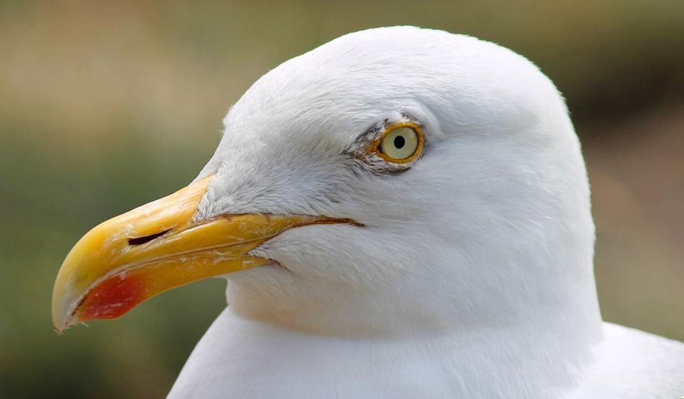 La foto del ave causó asombro en las redes. (Foto referencial: Pixabay)
