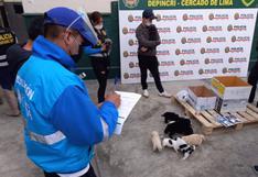 Rescatan a canes que iban a ser vendidos de manera ilegal en Mesa Redonda