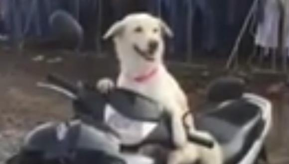 Youtube viral   Perro se convierte en guardaespaldas y vigila la moto de su dueña mientras que ella hace sus compras [VIDEO]