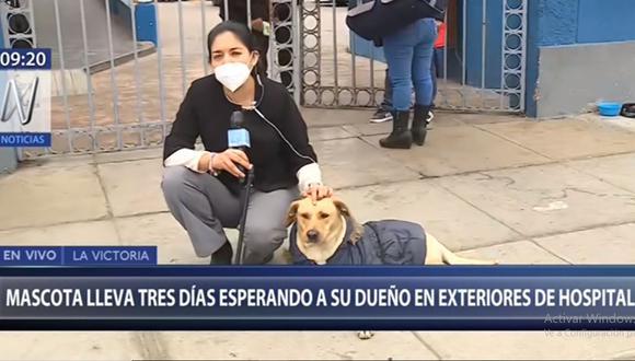 La mascota permanece en la puerta que da acceso al hospital Guillermo Almenara de EsSalud. (Canal N)