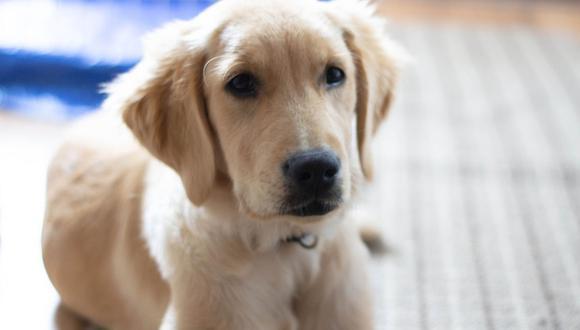 El perro quiso ayudar a la mujer y eventualmente lo pudo hacer sin problemas. (Pixabay)