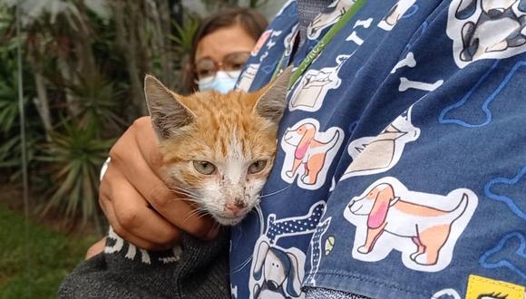 El minino que se salvó de morir envenenado fue bautizado con el nombre de Guardián. (Foto: Municipalidad de Surco)