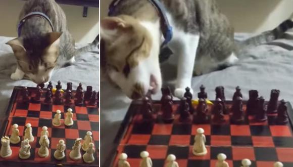 El gato causa sensación en Internet luego de 'jugar ajedrez' con su dueña. (Foto: ViralHog / YouTube)