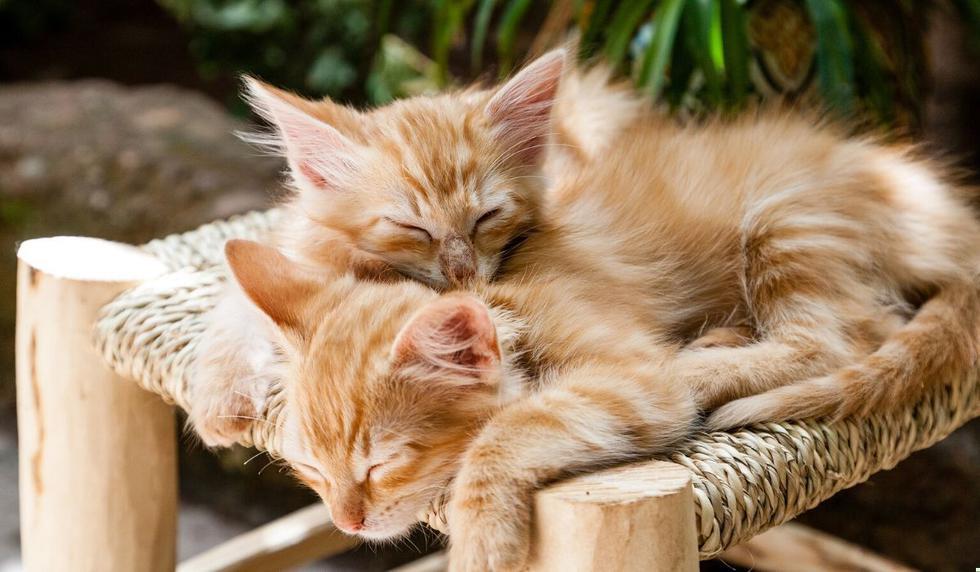 Los gatos cautivaron a muchas personas en las redes. (Foto referencial: Pixabay)