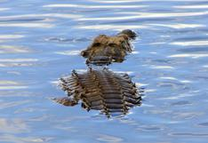 El aterrador momento en que un cocodrilo nada a toda velocidad para perseguir a un bote