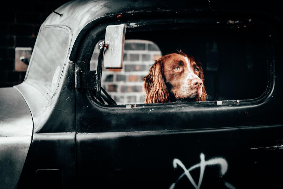 Policías en Estados Unidos no podían salir de su asombro al intervenir un auto y descubrir a un perro detrás del volante, acompañado de su dueño. (Foto: Pixabay/Referencial)