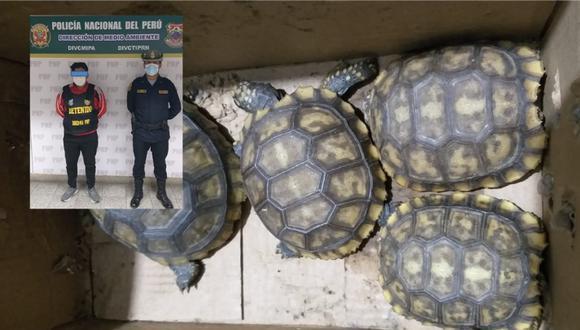 Bradling Raul Molina Barzola, de 26 años, pretendía comercializar ilegalmente especies de fauna silvestres. Foto: Difusión