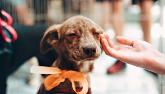 Incorporar un perro en tu rutina implica un nivel de dedicación y esfuerzo importante. (Foto: Pexels | Helena Lopes)