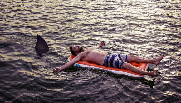 En Florida, un tiburón mordió el brazo de un hombre y no lo soltó hasta que llegaron unos paramédicos. (Foto: Referencial / Pixabay)