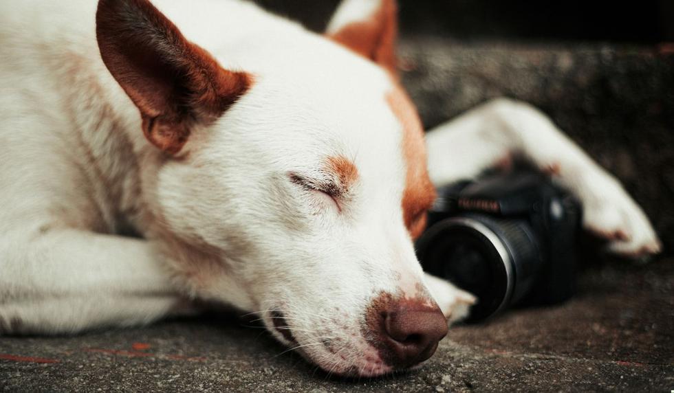 Foto 1 de 5: Desliza para ver las imágenes del can. (Foto referencial: Pexels)