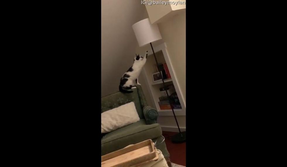 El nombre del gato se desconoce. (Captura video de YouTube)