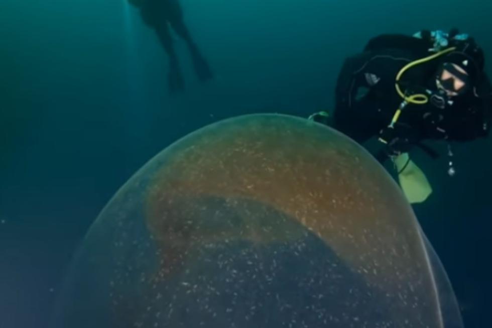Se hizo viral en YouTube el hallazgo de un grupo de científicos en las costas de Noruega. (Foto: Captura)