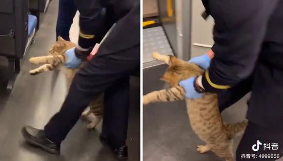 El animal fue retirado por uno de los empleados del tren. (Foto: 林毛 | Facebook)