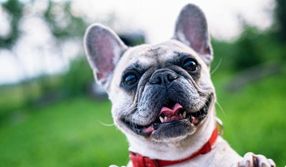 El perro se mostró muy animado en el video. (Foto referencial: Pixabay)