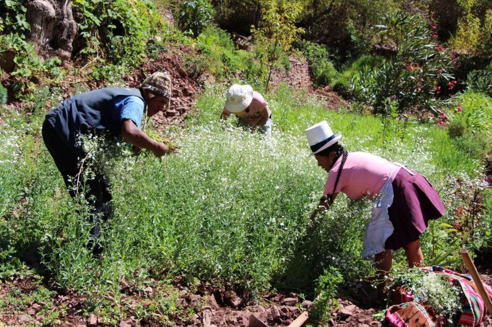 El bono rural consistirá en S/ 760 soles que recibirán alrededor de 1 millón de familias de las zonas rurales del país (Foto: Andina)