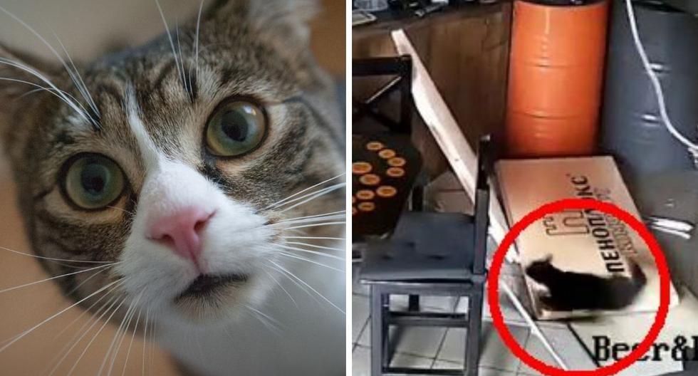 La grabación muestra al felino cayendo del techo del establecimiento, ubicado en Rusia. (Foto: Pexels   @beerbeerkrasnodar   Instagram)