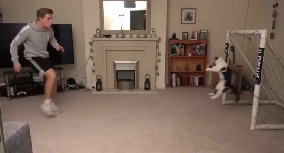 Youtube Viral: Los asombroso reflejos de un gato como arquero