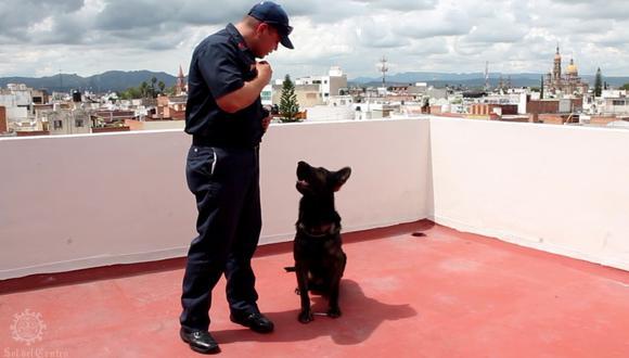 Un perrito irrumpió una obra de teatro para salvar a un joven que estaba tirado en el piso. Esto ocurrió en Turquía y fue grabado por Izmit. Foto: Difusión