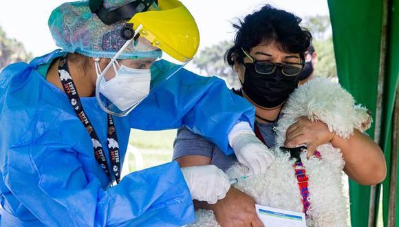 La vacunatón de mascotas se desarrollará en tres parques de Surco. La campaña está dirigida a vecinos y personas de otras jurisdicciones de Lima. (Foto: Municipalidad de Surco)