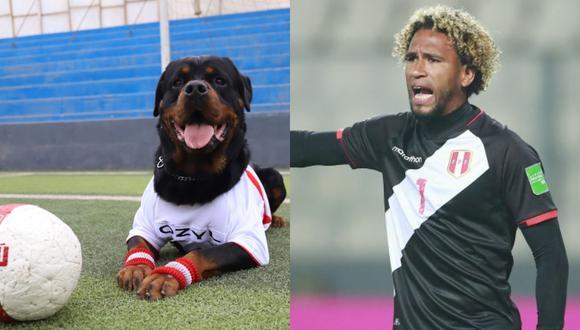 Un perro de raza Rottweiler de la Brigada Canina del Serenazgo de Magdalena, 'sueña' con ser el Pedro Gallese en el mundo de los perros.