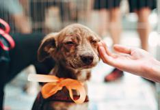 Requisitos para adoptar un perro en Lima