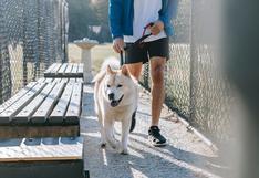 5 consejos para pasear a mi perro en cuarentena