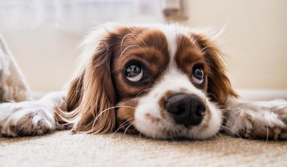 El perro causó sensación en las redes sociales. (Foto referencial: Pixabay)