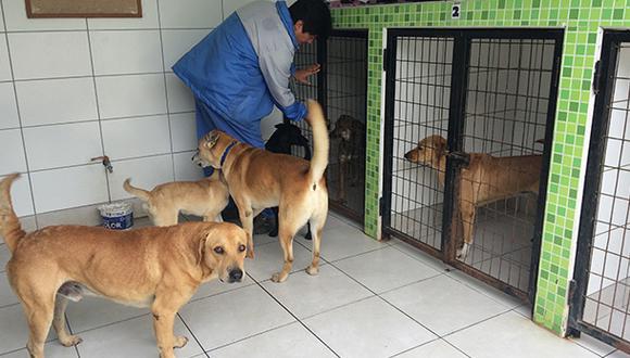 Ley de Cuatro Patas busca hacer un control de la población de mascotas y evitar su abandono en las calles. (GEC)