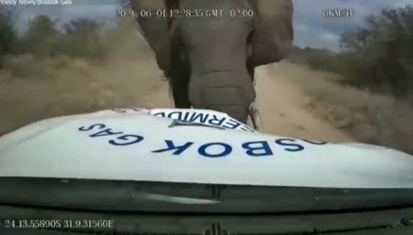 Enorme elefante atacó a conductor que se encontraba en una reserva de Sudáfrica en una camioneta.