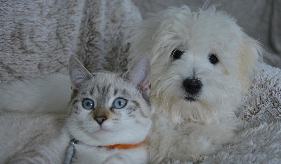 El video de las mascotas conmovió a miles de usuarios. (Foto referencial: Pixabay)