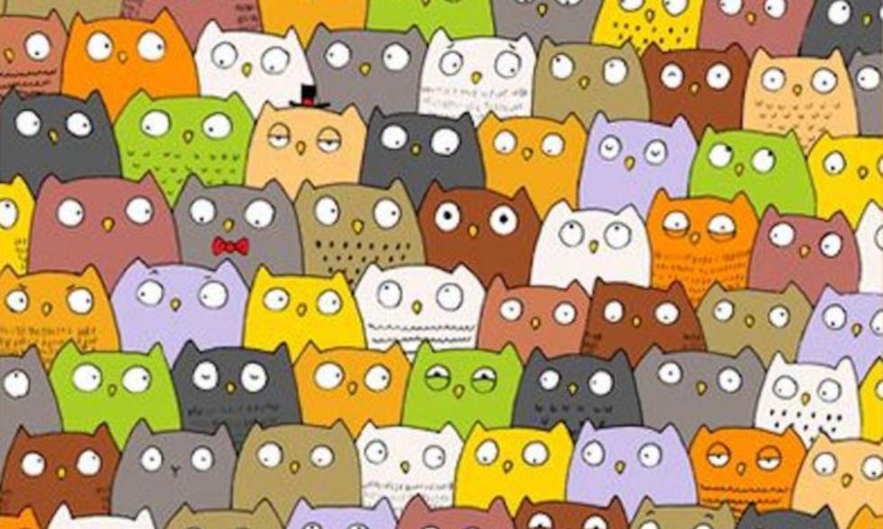 ¿Puedes encontrar al gato entre todos estos búhos? [FOTO]